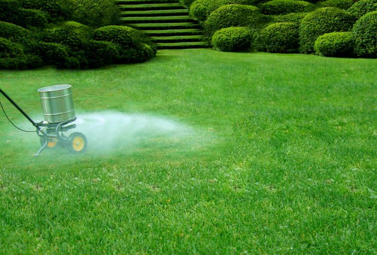 Необходимость подкормки газона