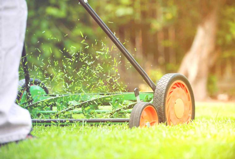 Покос травы с утилизацией от Ландшафтной мастерской Ильи Лациса