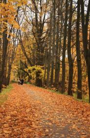 Практическое применение деревьев в ландшафте