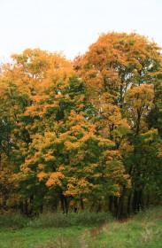 Купы деревьев