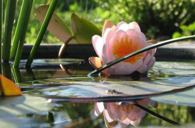 Мини-водоемы для декора участка издорового микроклимата