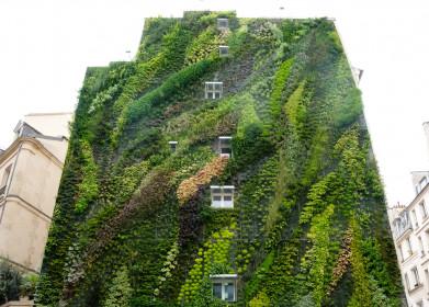Создание зеленого фасада ирастения для его оформления