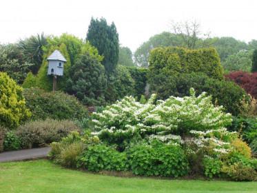 Карликовые хвойные растения в саду