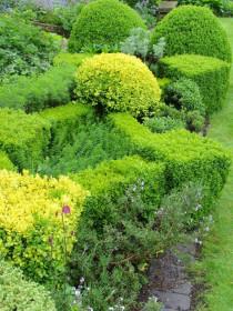 Стриженые кустарники как интересное и эффектное украшение