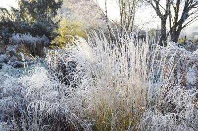 Растения для зимнего ландшафтного дизайна