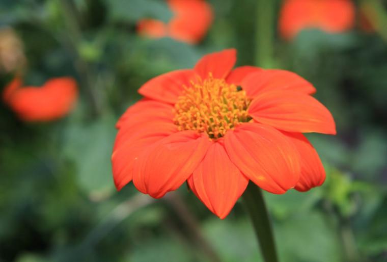 Деление цветов в цветнике на дачном участке