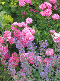 Композиции и конструкции из розовых кустов