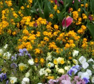 Цветы для уличных вазонов на участке