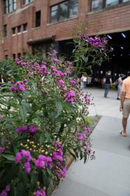 Озеленение и благоустройство территории поможет повысить посещаемость торгового центра