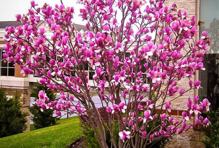 Особенности и критерии выбора карликовых деревьев для озеленения загородного участка