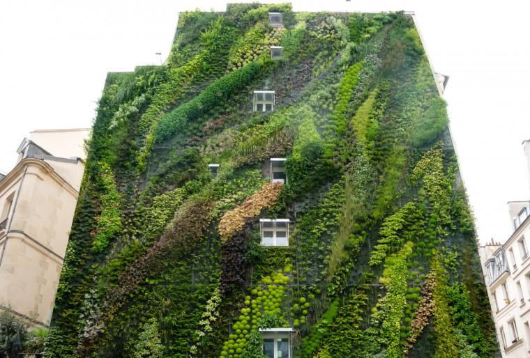 Создание зеленого фасада и лучшие растения для его оформления