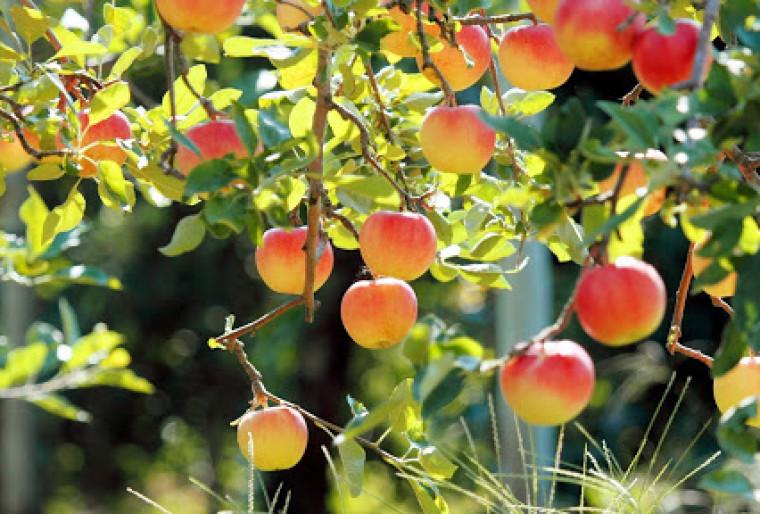 Осушить заболоченный участок под плодовый сад