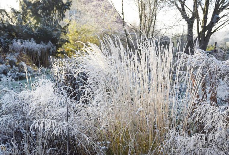Лучшие растения для зимнего ландшафтного дизайна сада или участка