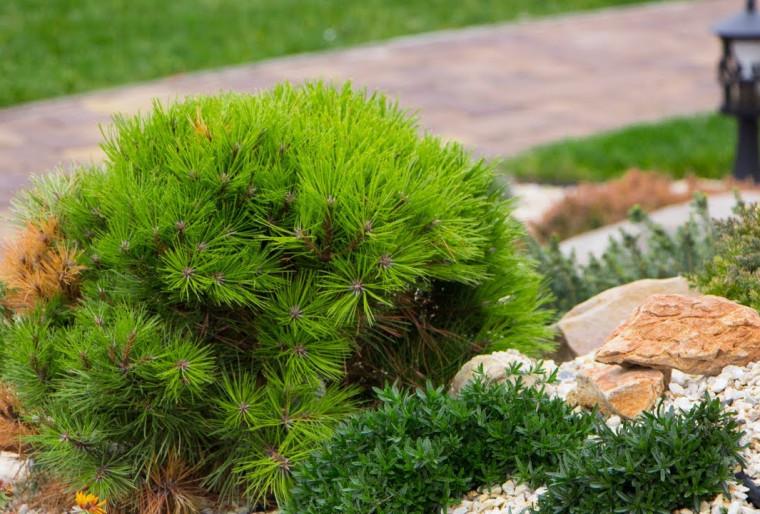 Польза и преимущества озеленения крыш и балконов в ландшафте