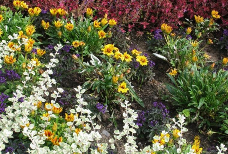 Особенности коллекционных садов