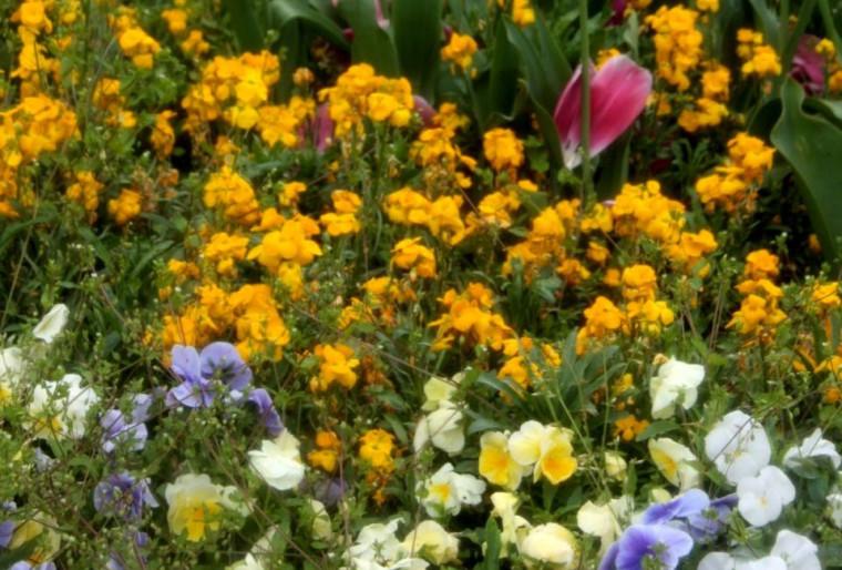 Цветы для уличных вазонов в ландшафтном дизайне